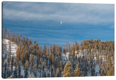 A Moon Watches Over Canvas Art Print