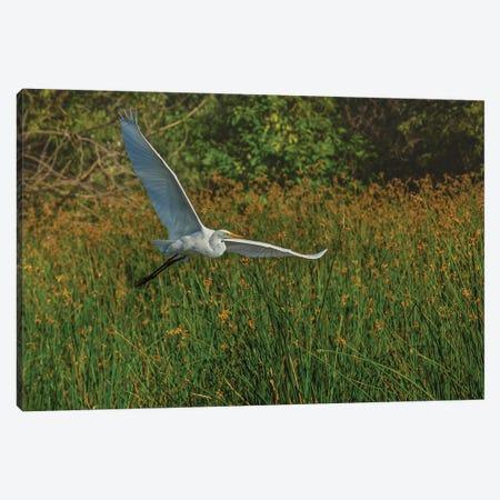 Gliding Egret Canvas Print #LRH213} by Louis Ruth Canvas Artwork
