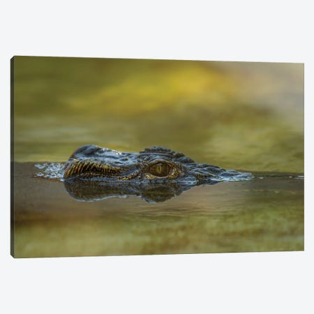 Gator Up Canvas Print #LRH214} by Louis Ruth Art Print