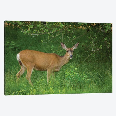 Hey You Deer Looking Canvas Print #LRH215} by Louis Ruth Canvas Art Print