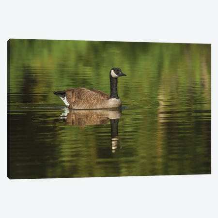 Goose On The Greens Canvas Print #LRH221} by Louis Ruth Canvas Art Print