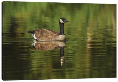 Goose On The Greens Canvas Art Print