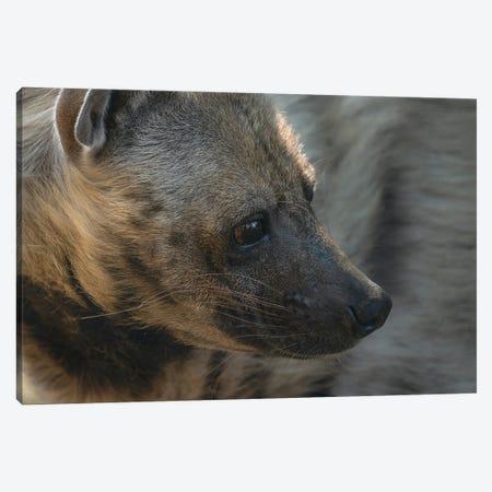 Hyena Head Shot Canvas Print #LRH222} by Louis Ruth Canvas Print
