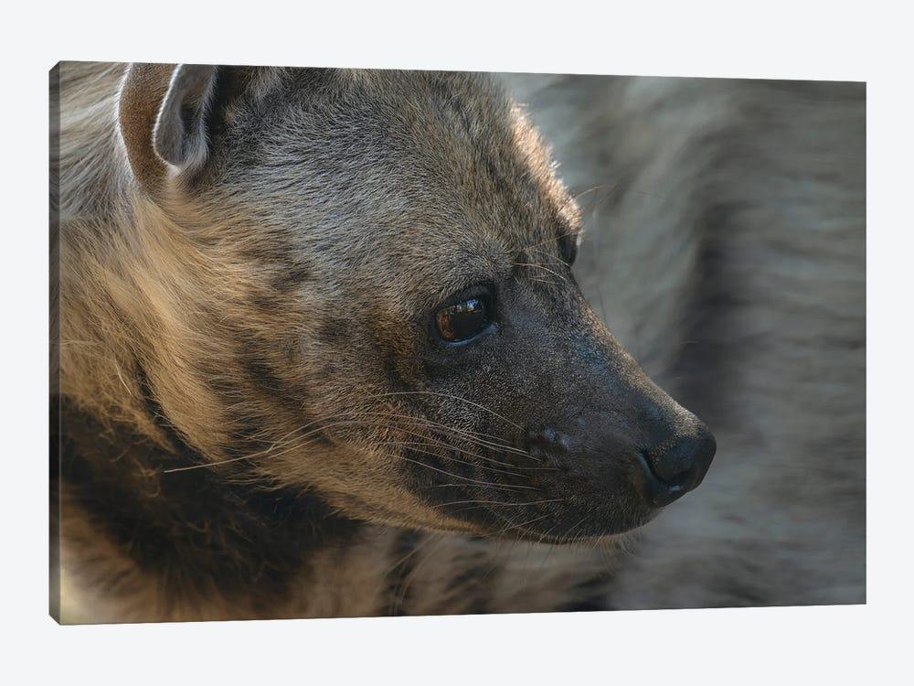 Hyena Head Shot by Louis Ruth 1-piece Canvas Art Print