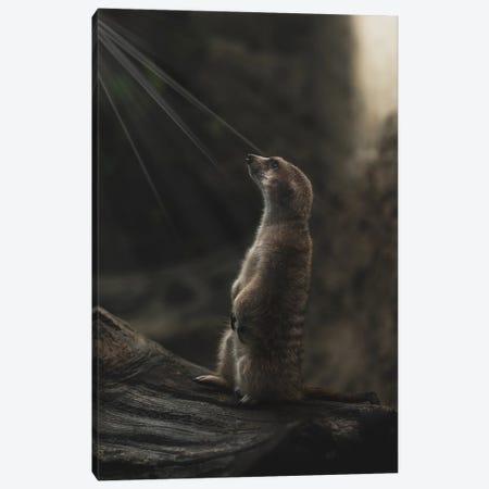 Meerkat Portrait With Light Rays Canvas Print #LRH229} by Louis Ruth Art Print