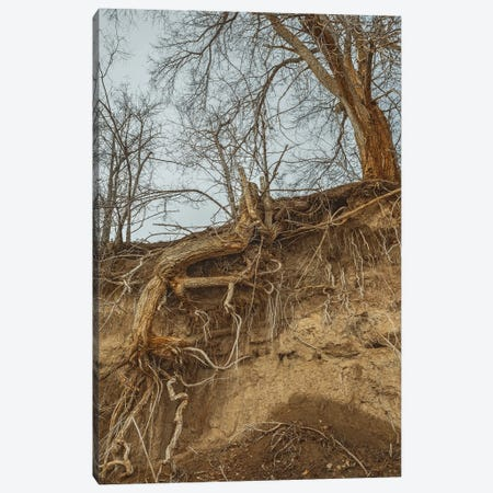Deep Rooted Canvas Print #LRH249} by Louis Ruth Canvas Print