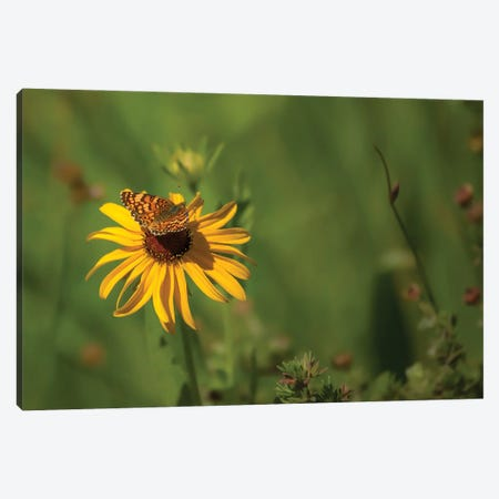 Beauty Comes In All Sizes Canvas Print #LRH251} by Louis Ruth Canvas Wall Art