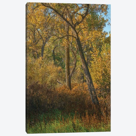 Feel The Colors Of Fall Canvas Print #LRH258} by Louis Ruth Canvas Artwork