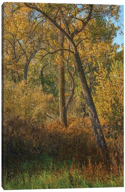 Feel The Colors Of Fall Canvas Art Print