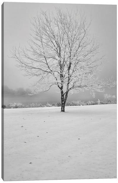 High Dynamic Winter Tree Canvas Art Print