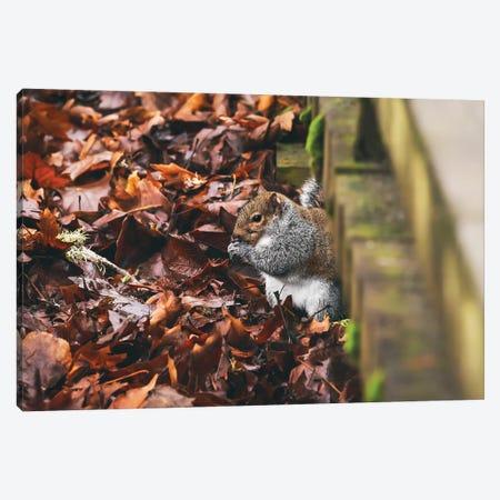Hidden Squirrel Canvas Print #LRH289} by Louis Ruth Canvas Art Print