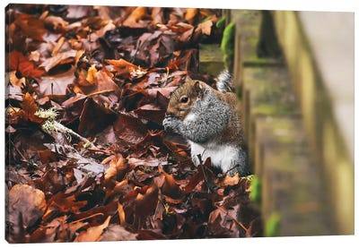 Hidden Squirrel Canvas Art Print