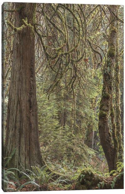 Tree Light 2020 Canvas Art Print