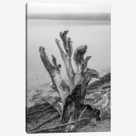 Gnarly Stump Canvas Print #LRH300} by Louis Ruth Canvas Artwork