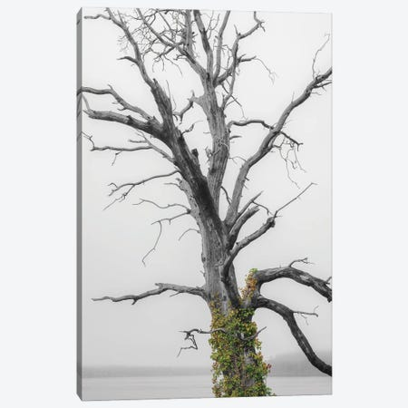 Color Splash Ivy Canvas Print #LRH302} by Louis Ruth Canvas Artwork