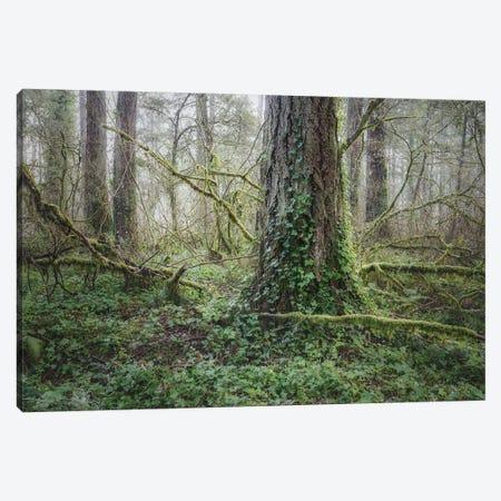 Floor Of Ivy 2021 Canvas Print #LRH304} by Louis Ruth Canvas Art Print