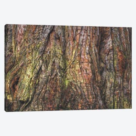 Sequoia Tree Bark Canvas Print #LRH307} by Louis Ruth Canvas Art Print