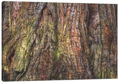 Sequoia Tree Bark Canvas Art Print