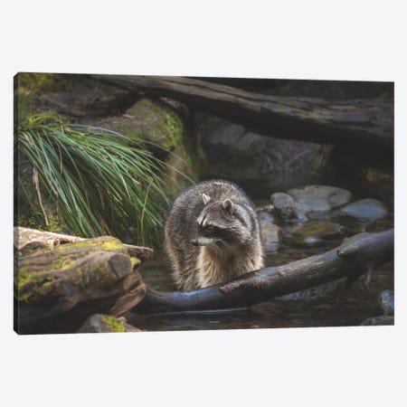 A Coon Bath Canvas Print #LRH327} by Louis Ruth Canvas Art Print