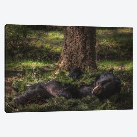 Bear Nap Canvas Print #LRH330} by Louis Ruth Art Print