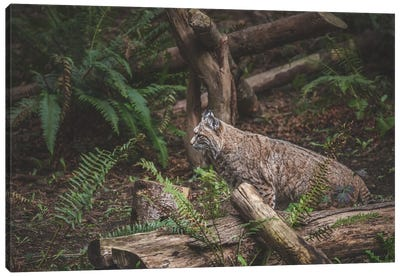 Hidden Bobcat Canvas Art Print