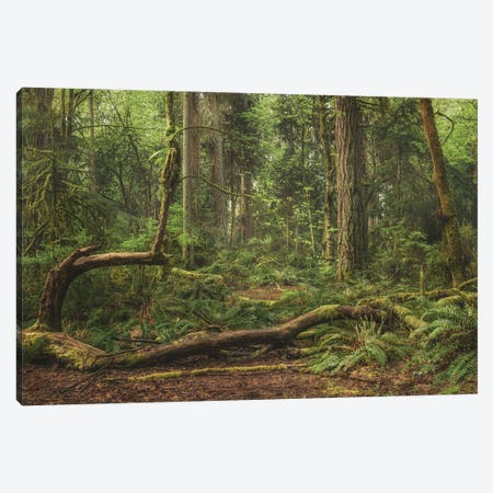 Up And Out Canvas Print #LRH349} by Louis Ruth Canvas Art