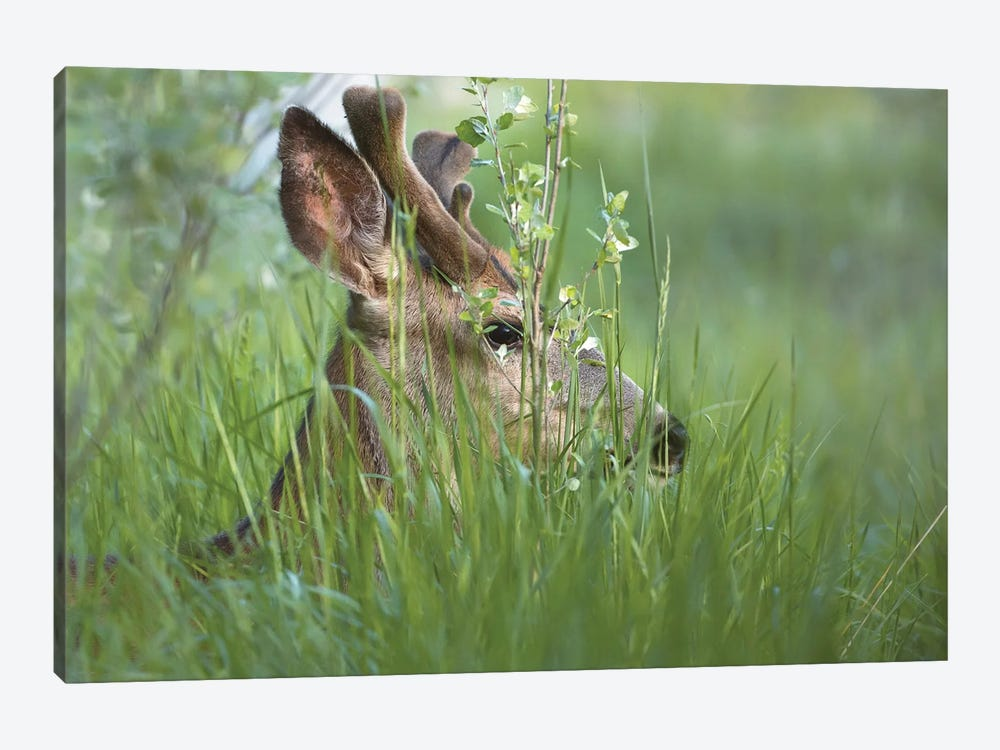 Bedding Down by Louis Ruth 1-piece Canvas Art