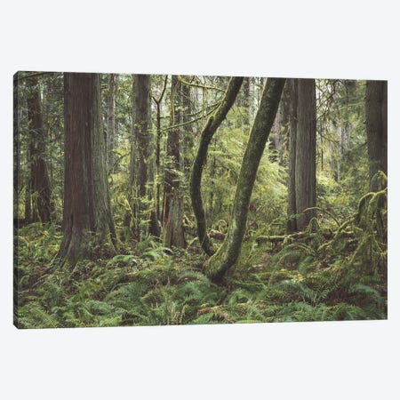 A Kodak Moment Canvas Print #LRH350} by Louis Ruth Art Print