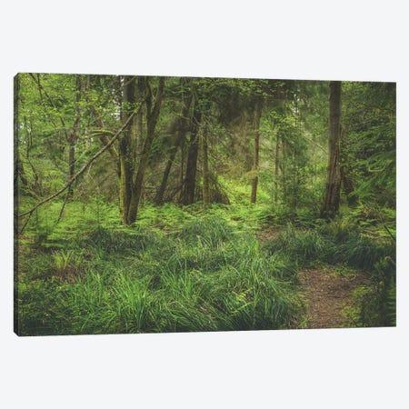 Lush Greens Canvas Print #LRH368} by Louis Ruth Canvas Art