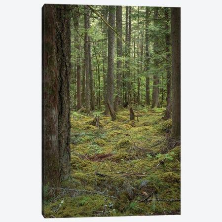 Mountain Fern Moss Canvas Print #LRH388} by Louis Ruth Canvas Wall Art