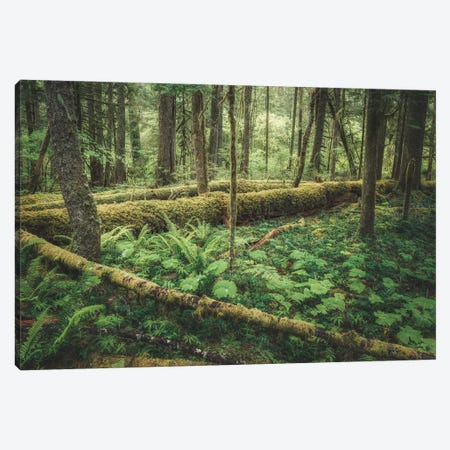 Outdoor Forest Love Canvas Print #LRH391} by Louis Ruth Canvas Print