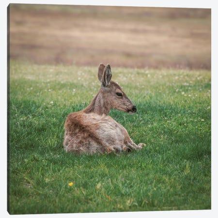 Resting Deer In Green Grass Canvas Print #LRH393} by Louis Ruth Art Print