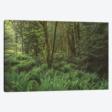 Rain Forest Green Canvas Print #LRH406} by Louis Ruth Canvas Artwork