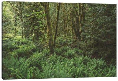 Rain Forest Green Canvas Art Print