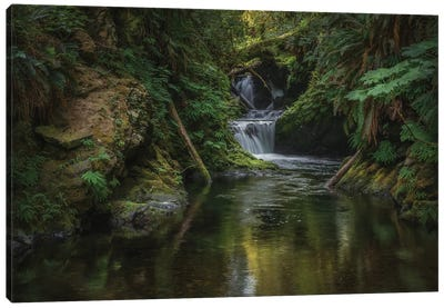 Willaby Falls Quinault Rain Forest Canvas Art Print