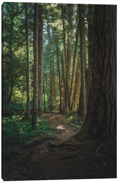 A Stroll In Federation Forest Canvas Art Print