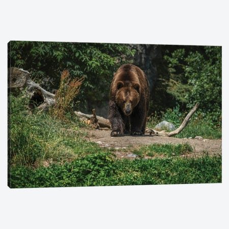 Im Coming For You Canvas Print #LRH53} by Louis Ruth Art Print