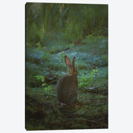 Little One Of The Forest Canvas Print #LRH64} by Louis Ruth Art Print