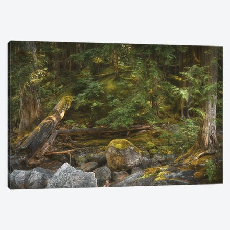 Peace And Quiet Canvas Print #LRH75} by Louis Ruth Canvas Wall Art