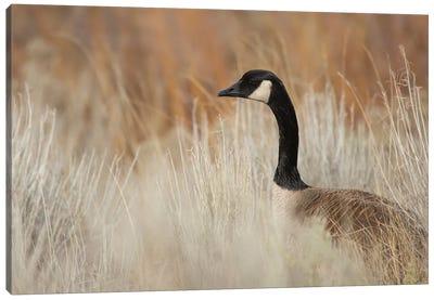 Peek-A-Boo Goose Canvas Art Print
