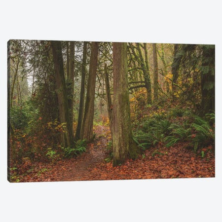 A Fairytale Like Forest Canvas Print #LRH87} by Louis Ruth Canvas Print