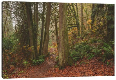 A Fairytale Like Forest Canvas Art Print