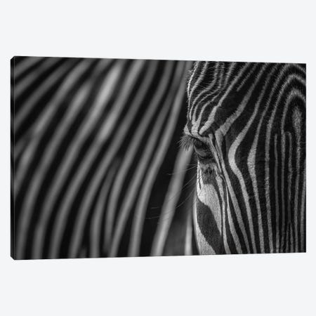 Simple Pattern-Camouflage Black And White Canvas Print #LRH89} by Louis Ruth Canvas Art