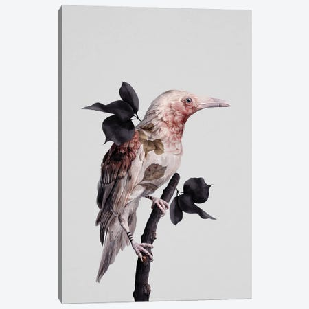 Nevermore Canvas Print #LRR15} by Laura H. Rubin Canvas Artwork