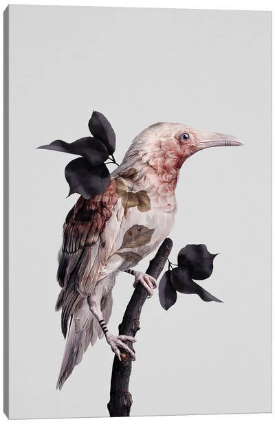 Nevermore Canvas Art Print
