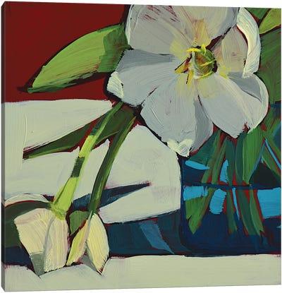 Three White Tulips Canvas Art Print