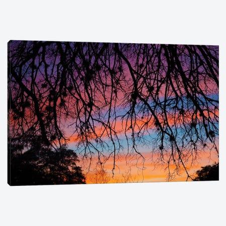 Pastel Sunset Silhouette Canvas Print #LRU20} by Doug LaRue Canvas Print