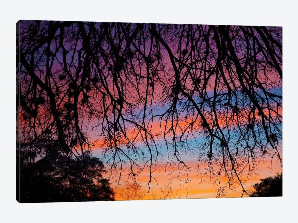 Pastel Sunset Silhouette by Doug LaRue 1-piece Canvas Print