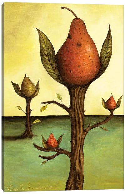 Pear Tree I Canvas Art Print