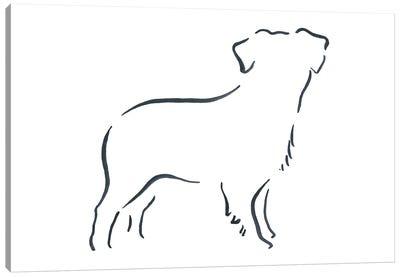 Miniature Australian Shepherd Canvas Art Print